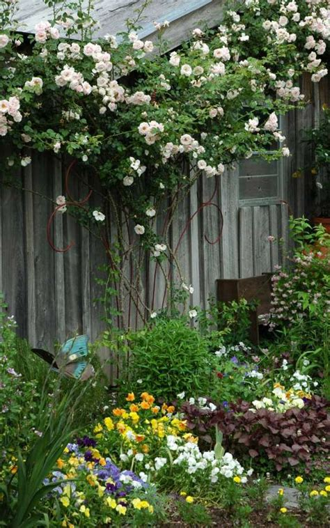 ideas for climbing rose supports seven tips for growing climbing roses houston chronicle