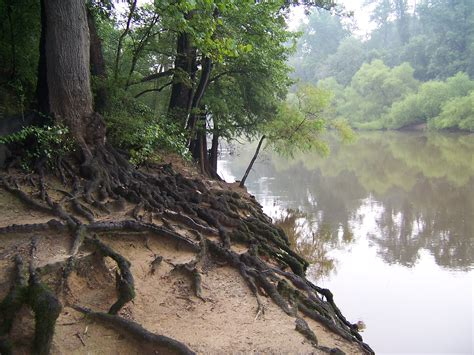 the roots wikipedia file tree roots at riverside jpg wikimedia commons