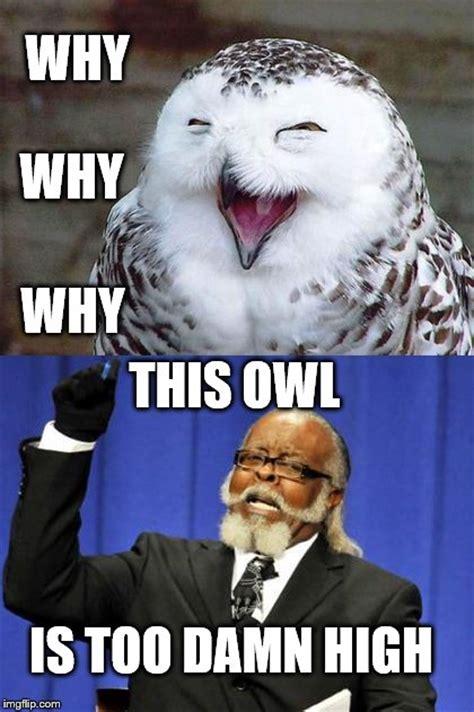 Is Too Damn High Meme Generator - high owl imgflip