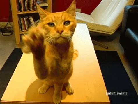 waving cat timkat gifs find on giphy