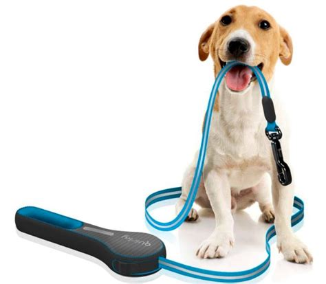 how to leash your how to choose the right leash for your