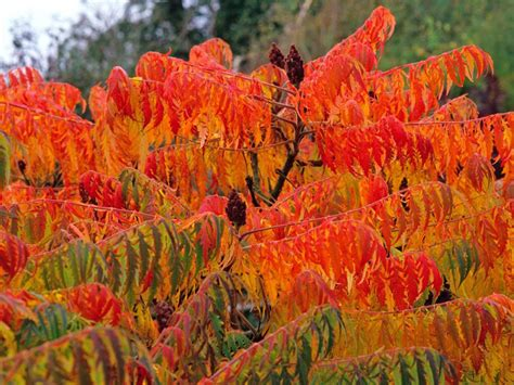 fall plants flowers and plants for fall color hgtv