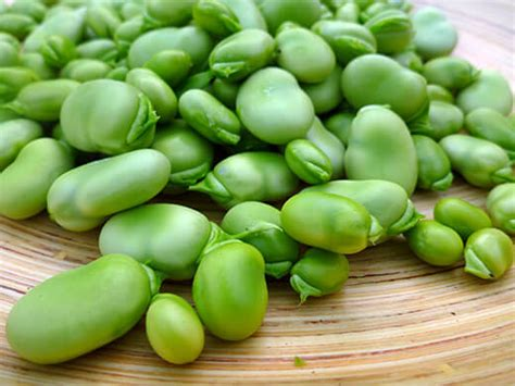 House Porch by Growing Harvesting And Shelling Fava Beans Garden Betty