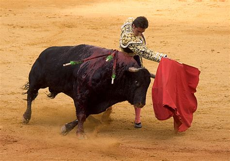 why do bulls the color i did not that yesterday why do bulls attack the