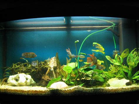 beautiful home fish tanks nice home aquariums on 35 unusual aquariums and custom