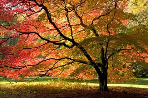 Peregrine Tree Landscape Sandpoint Tree Service
