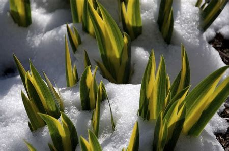jig006 to survive nature yellow surviving plants winter nature background wallpapers