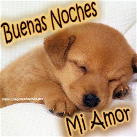 imagenes tiernas buenas noches mi amor im 225 genes de perritos tiernos con frases de buenas noches