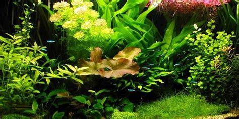 aquascape dutch style understanding dutch aquascaping style the aquarium guide