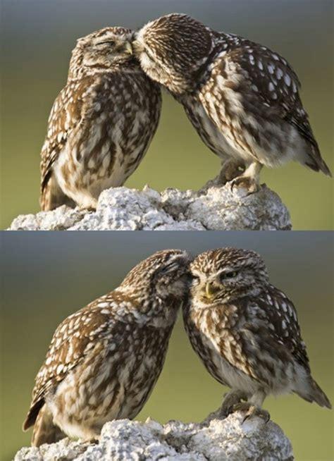owl lover owl love pic amazing creatures