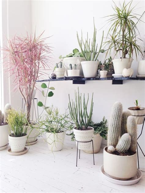 how to decorate home with plants 7 different way to indoor plants decoration ideas in