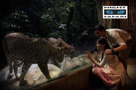 safari singapore new year safari tour singapore distant journeys