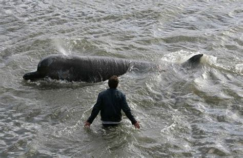 thames river dolphin more than 2 500 whales seals and dolphins spotted in the