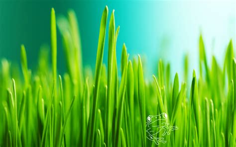 green hd wallpaper best fresh background image use lives grass full hd wallpaper and background image 2560x1600