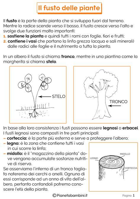 test italiano interno it le piante scuola primaria schede didattiche idee per