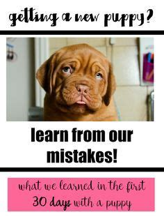 preparing for a puppy checklist 1000 ideas about new puppy checklist on new puppy puppy supplies and puppies