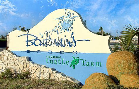 boatswain s beach grand cayman boatswains beach razorfox creative