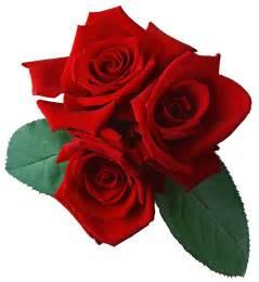 Flowers Photos Free Download - rose zeichnung clipart best