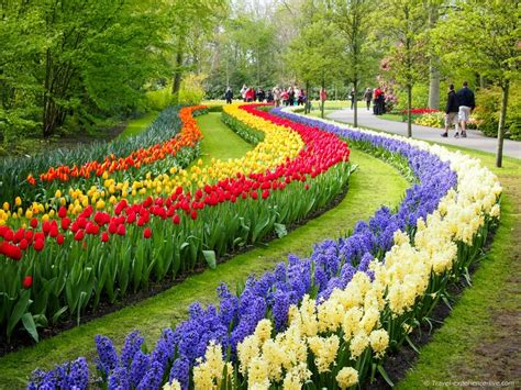 a visit to keukenhof in 40 pictures travel experience