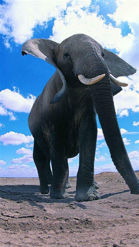 wallpaper iphone elephant 3wallpaperswallpaper hd iphone x 8 7 6 elephants