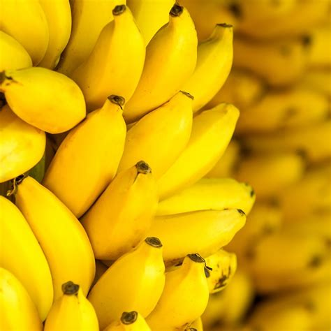 The Bananas why do bananas change to yellow when ripening 187 science abc