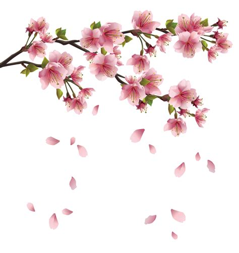 beautiful pink spring branch with falling petals png