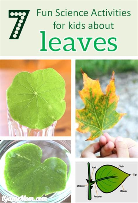 science activities for kids i am and for kids on pinterest 7 fun science activities for kids about leaves