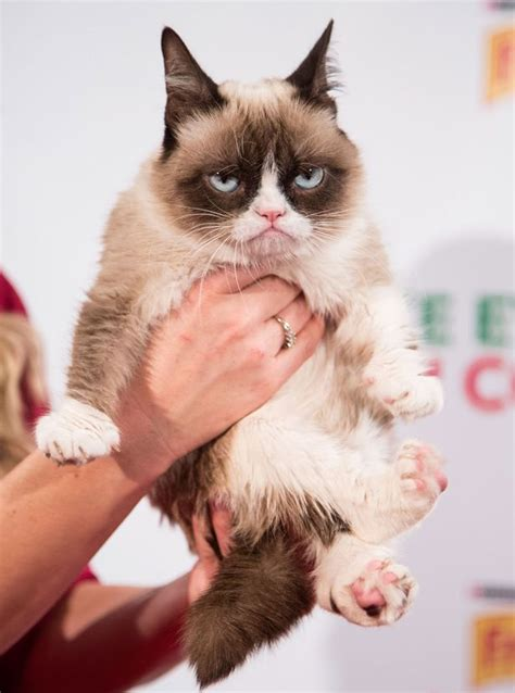 We Are The Cat On Tour by Cats Grumpy Cat Lil Bub Colonel Meow And More In