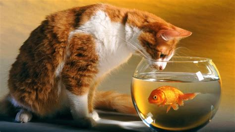 cat wallpaper gallery lovable images cute cat wallpapers free download
