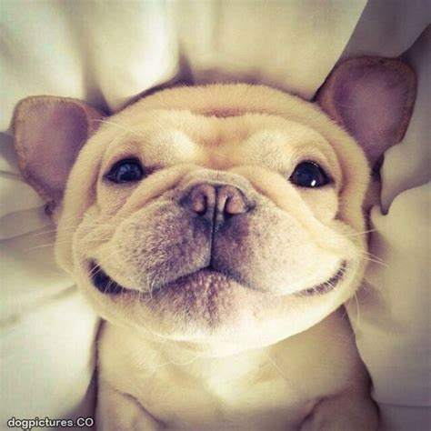 pictures of dogs smiling smile pictures