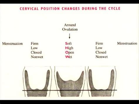 checking  cervix  tracking cervical fluid youtube