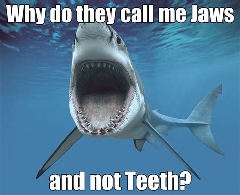 Meme Shark - shark meme jaws sharks scuba diving shark week