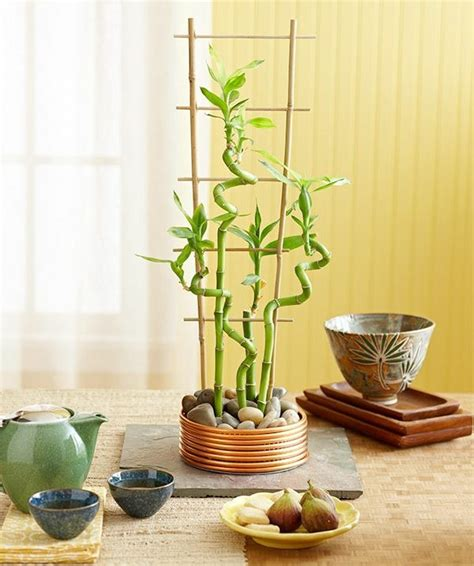 Bamboo Vase Ideas by Lucky Bamboo Plant Room Room Decorating Ideas Home