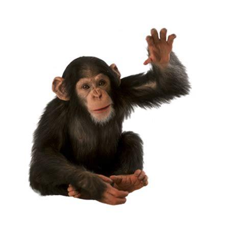 monkey background monkey png