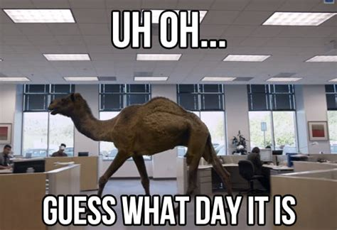 Hump Day Meme Funny - funny camel memes images