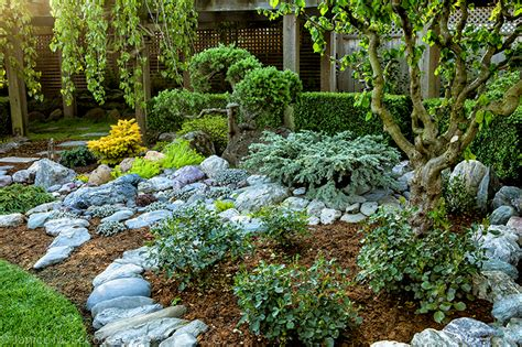 japanese maples form and foliage