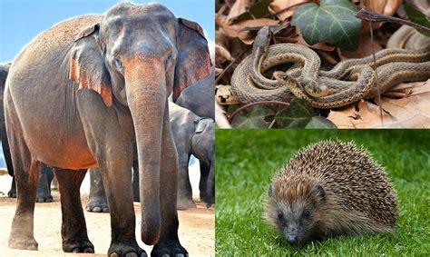 apareamiento animales 5 animales con curiosos ritos de apareamiento