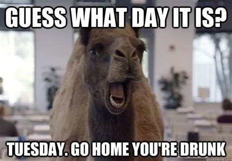Camel Hump Day Meme - guess what day it is tuesday go home you re drunk