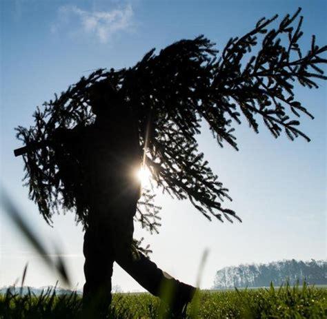 landesforstanstalt startet weihnachtsbaumverkauf welt