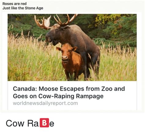 Canadian Moose Meme - search canadian eh memes on me me