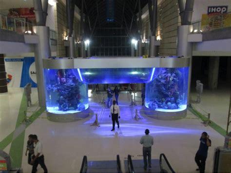 aquarium design brisbane bringing global skills to australia aquatic exhibits