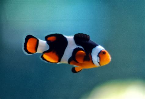 los peces de la 191 existen los peces cuaderno de cultura cient 237 fica