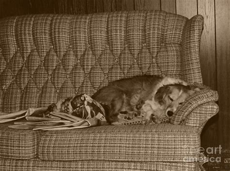 dog sleeping on couch my dog sleeping on the couch circa 1976 photograph by