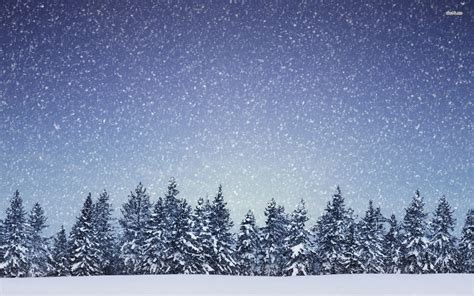 snowing on the fir forest wallpaper