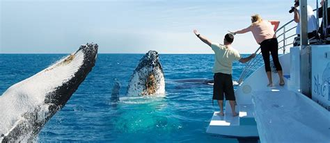 blue dolphin boat tours whale watching cruise on hervey bay award winning blue