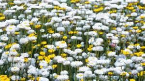 Cottage Style Bathroom Ideas homelife australian wildflowers