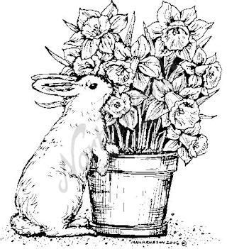 daffodil rubber st coloring for adults coloring and rabbit on