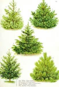 tree types botanical trees leaves vintage printable at