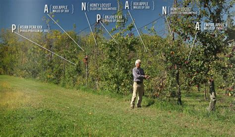 one acre homestead here s what to plant raise and build here is how you make a living from a 4 acre permaculture orchard permaculture apprentice
