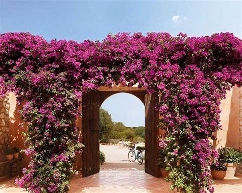 imagenes de rosas trepadoras 11 plantas trepadoras para adornar el interior o exterior